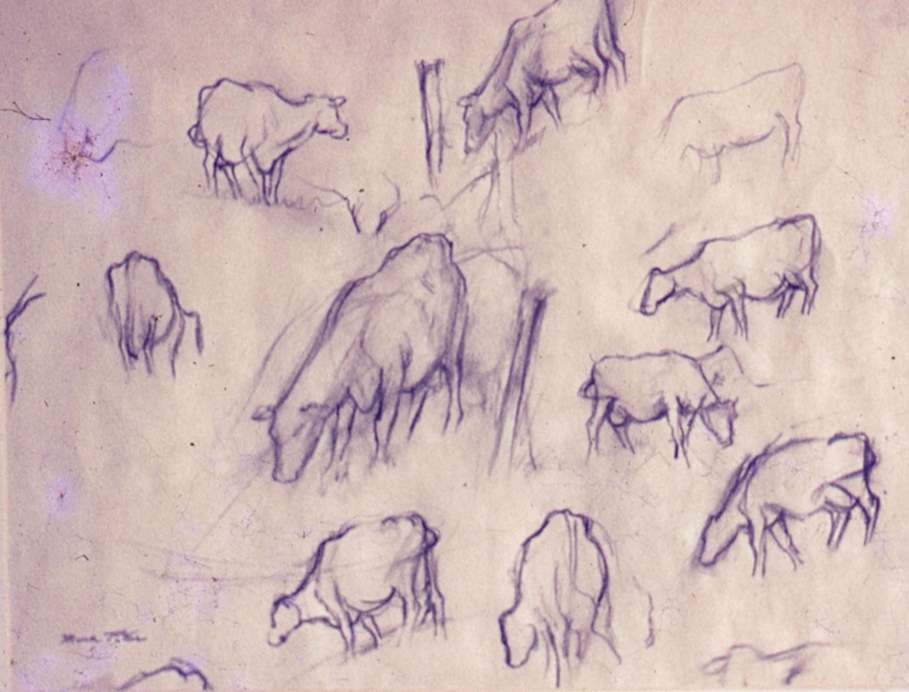 Study for Cows.      1985, pencil on paper. 11 x 14 inches.