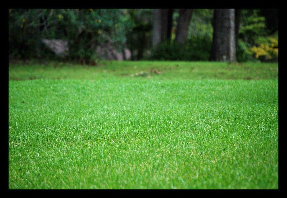 Tallahassee+Green+Grass-min.jpg