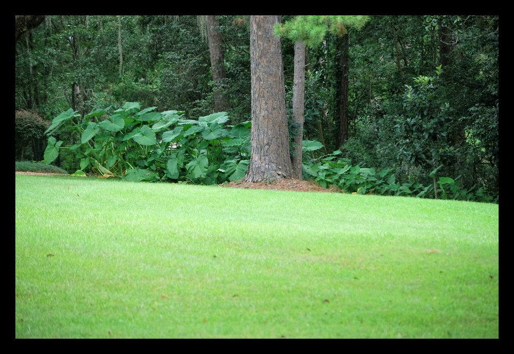 Tallahassee+lawn+care+control-min.jpg