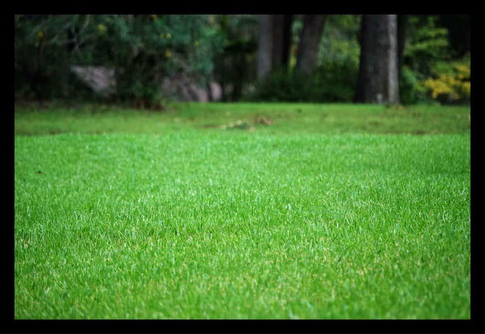 Tallahassee+Green+Grass-min-min.jpg