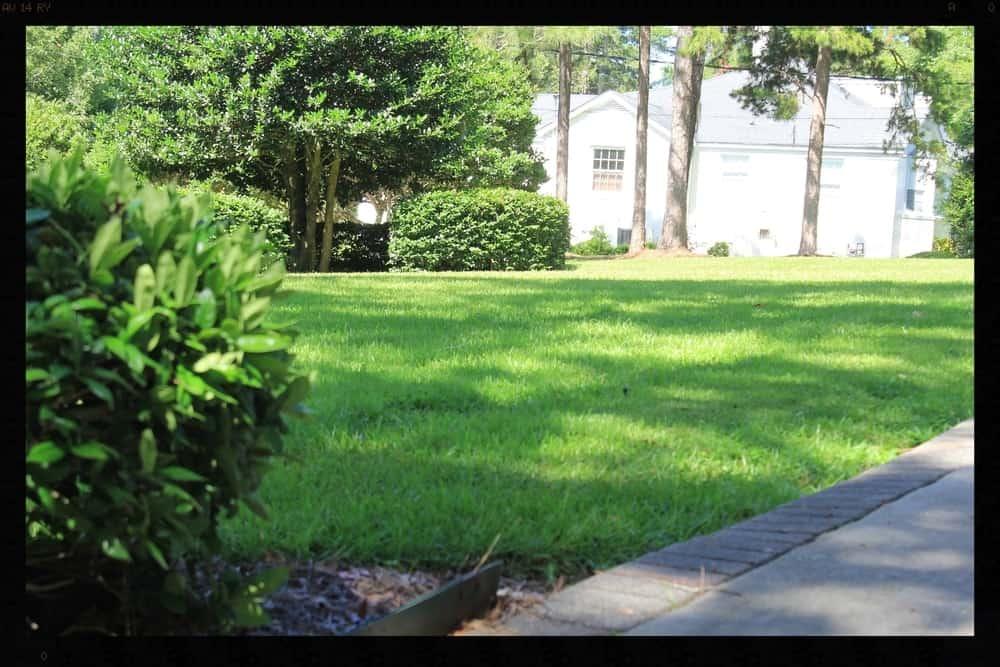 Tallahassee+Lawn+Care+3+-min-min.jpg