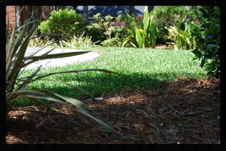 Tallahassee+Lawn+Care+5-min-min.jpg