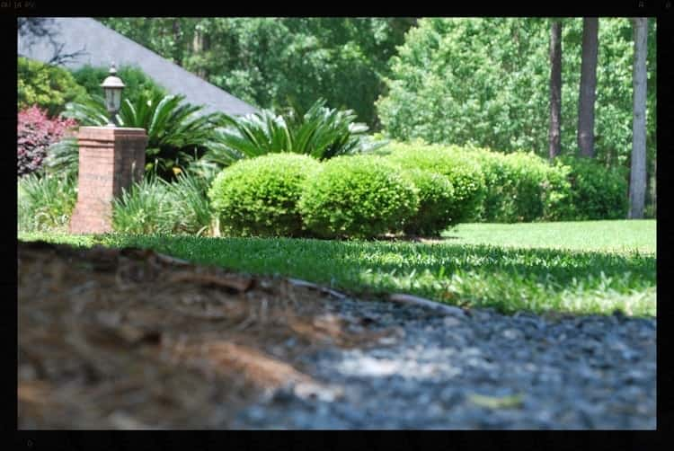 Tallahassee+Lawn+Care+6-min-min.jpg