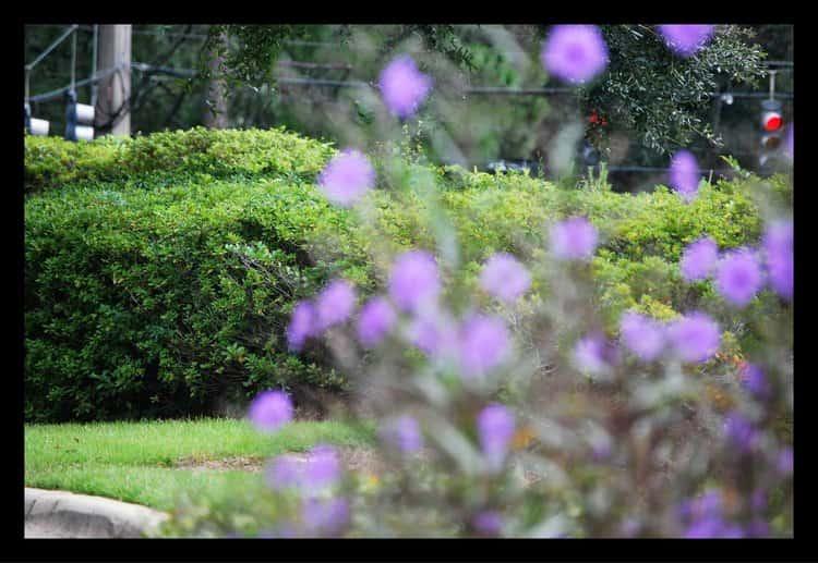 Tallahassee+Lawn+Care+flowers-min-min.jpg
