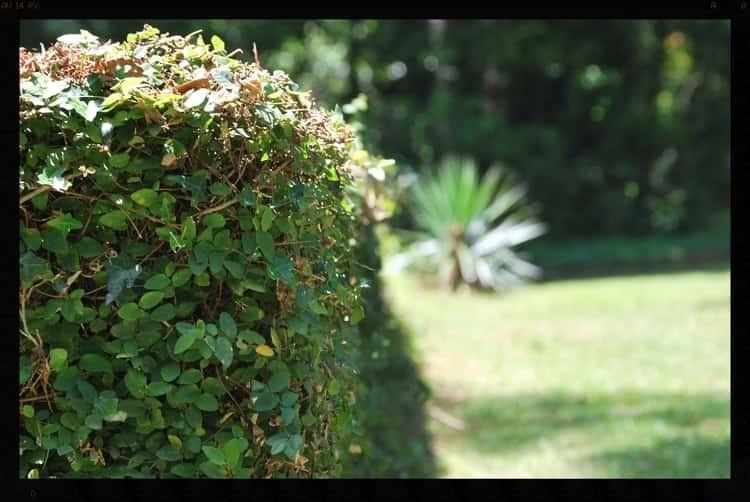 Tallahassee+Lawn+Care+-min-min.jpg