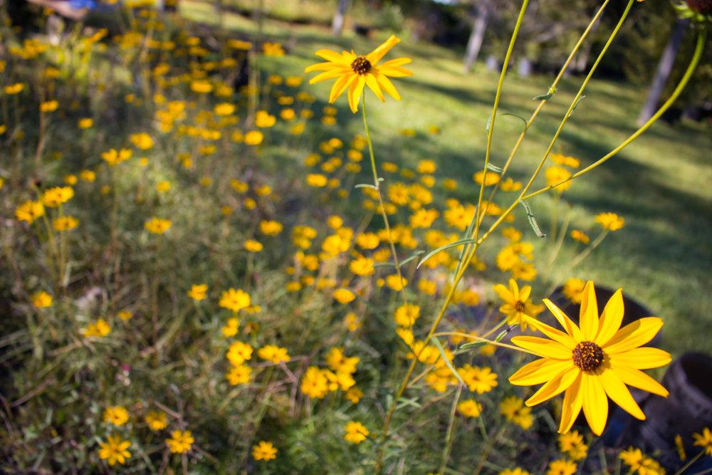 Weather Gardens Photo 1