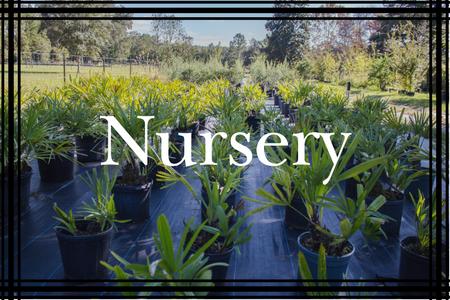 Nursery (2).png