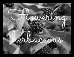 Landscaping+nusery+plants+Tallahassee+Crawfordville+Bainbridge+flowering+herbaceous.png