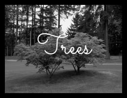 Landscaping+nusery+plants+Tallahassee+Crawfordville+Bainbridge+trees (1).png
