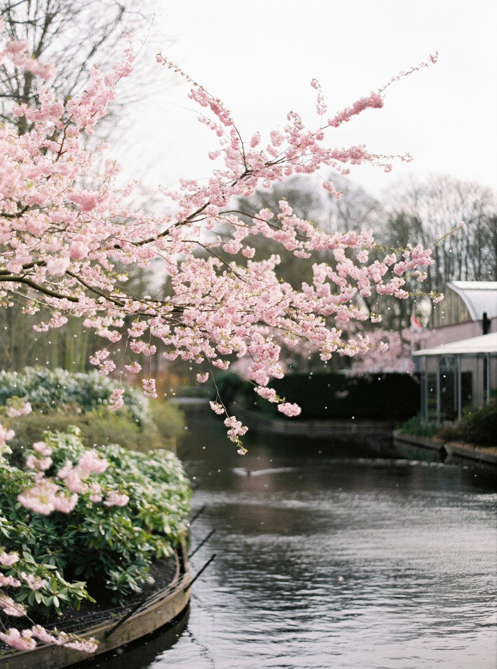 Roman_Spring2015-381.jpg