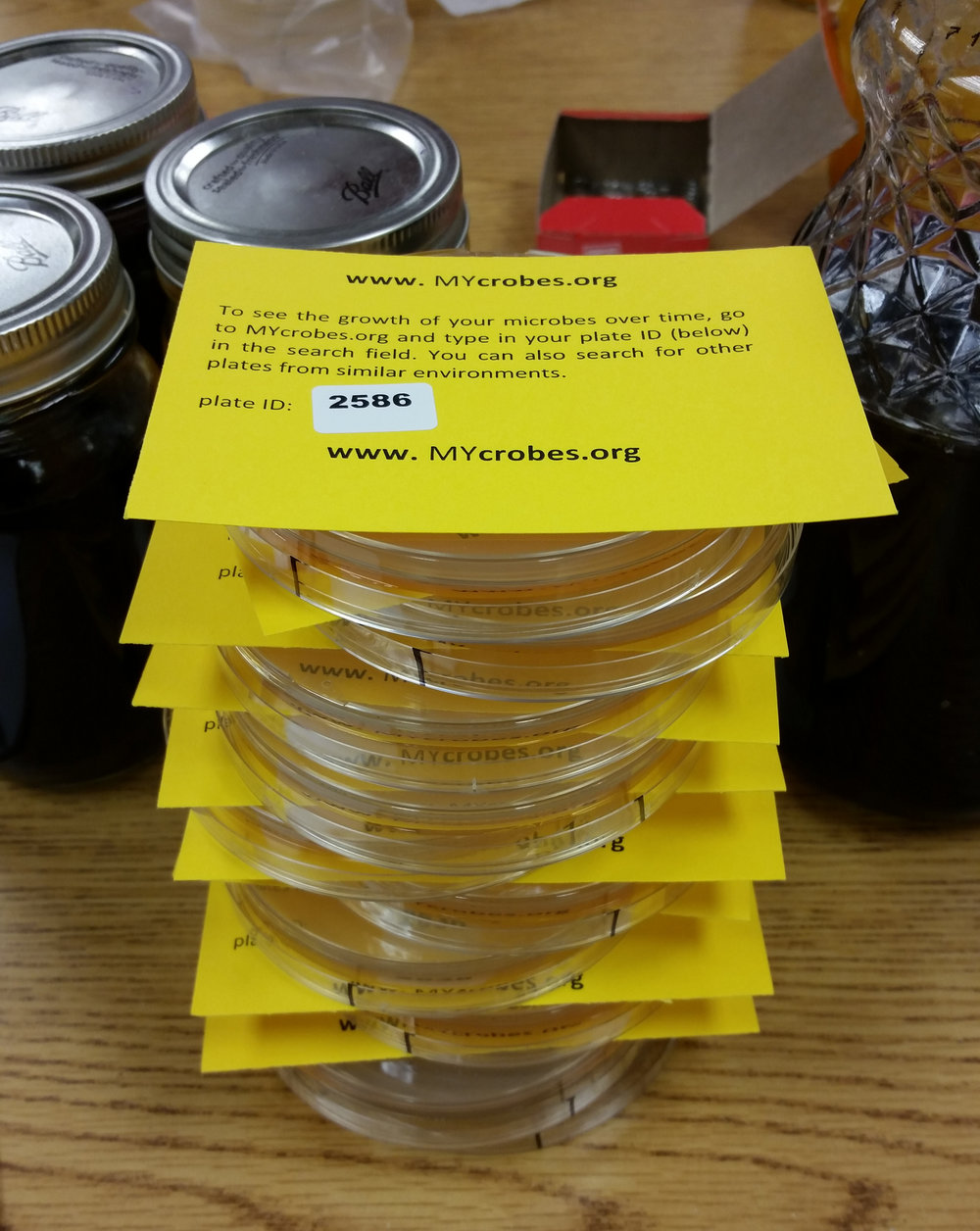 Agar plates - from the mycrobe project streaked by students at a local elementary school during a GIVE-run STEM night event.