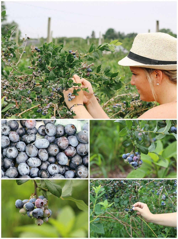 CaitlinElliott_Rhode Island_Blueberries
