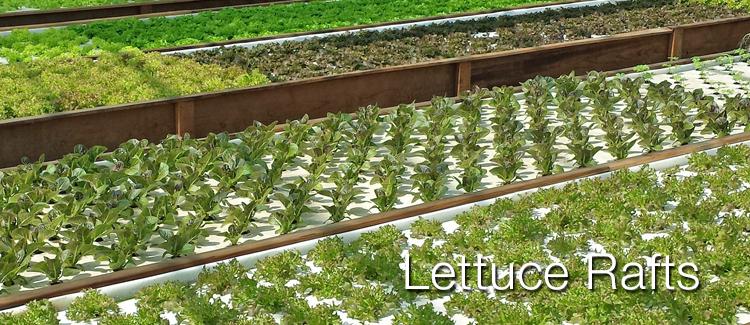 lettucerafts_2.jpg