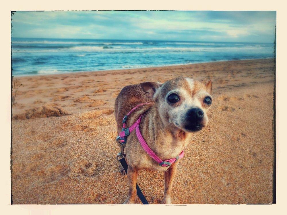 My sweet pup Naiyah, January 2017, Flagler Beach Florida. She is 8 years old.