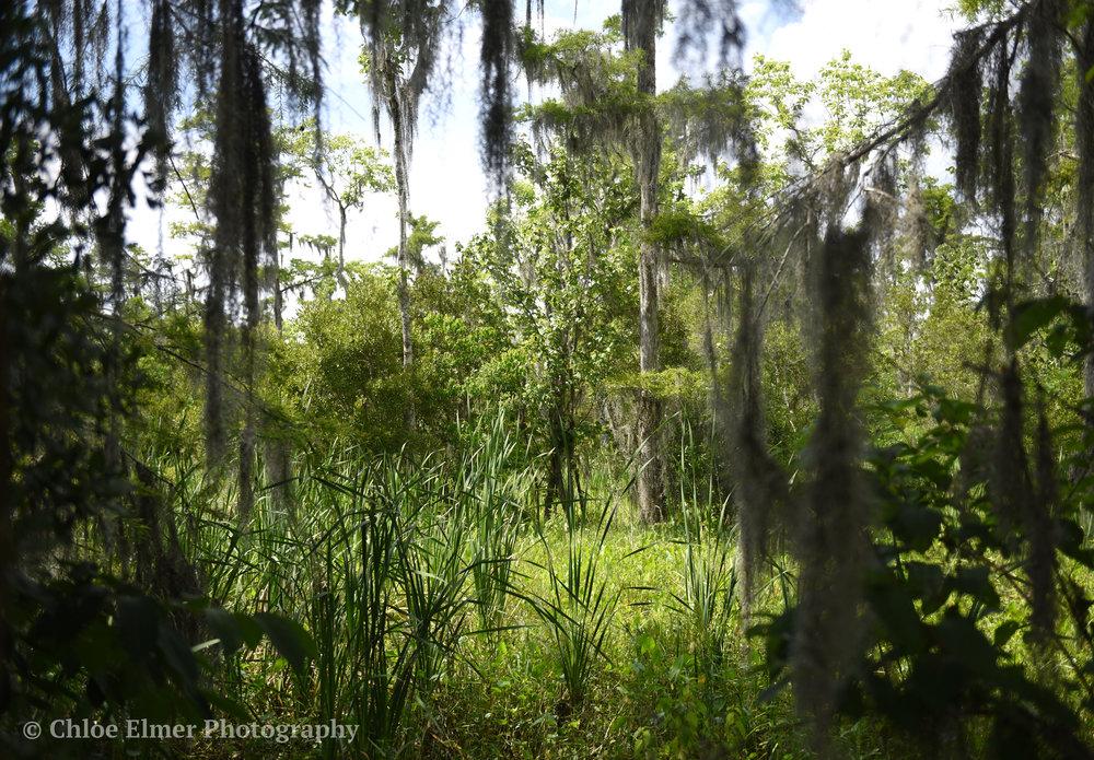 swamp8.JPG