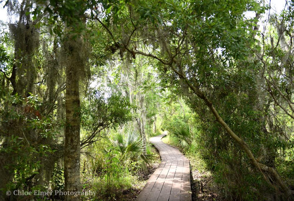 swamp15.JPG