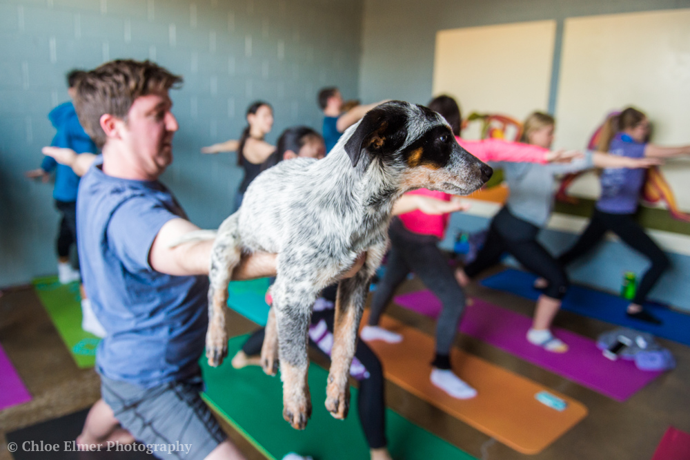 030418 SPCA puppy yoga 16.JPG