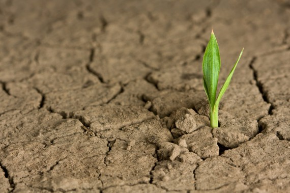 Hope plant growing in the desert-570x379.jpg