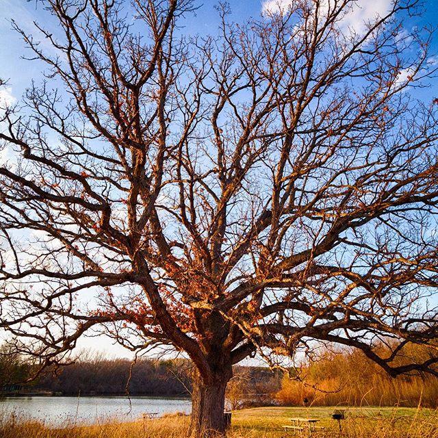 A quiet spot to listen to autumn winds #naturespace #autumn #fall