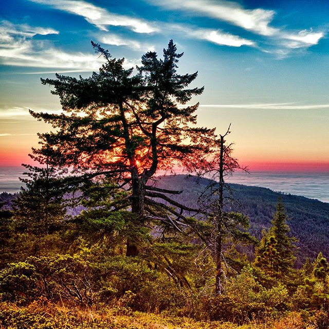 Happy Monday, everyone! #northerncalifornia #naturespace