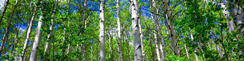 sunlight-aspen-nature-sounds-app