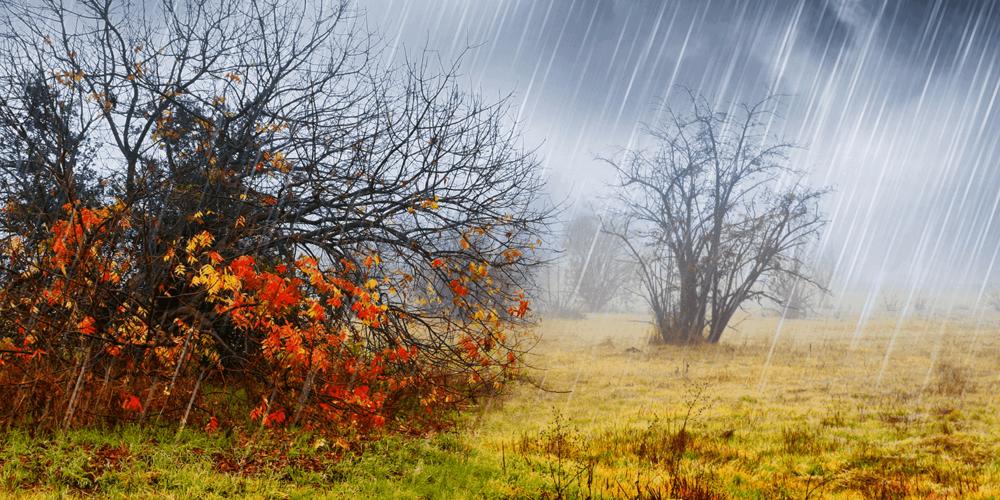 rain-naturespace-3d