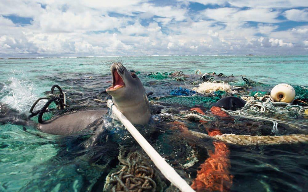 IMAGE CREDIT: PLASTIC OCEANS FOUNDATION