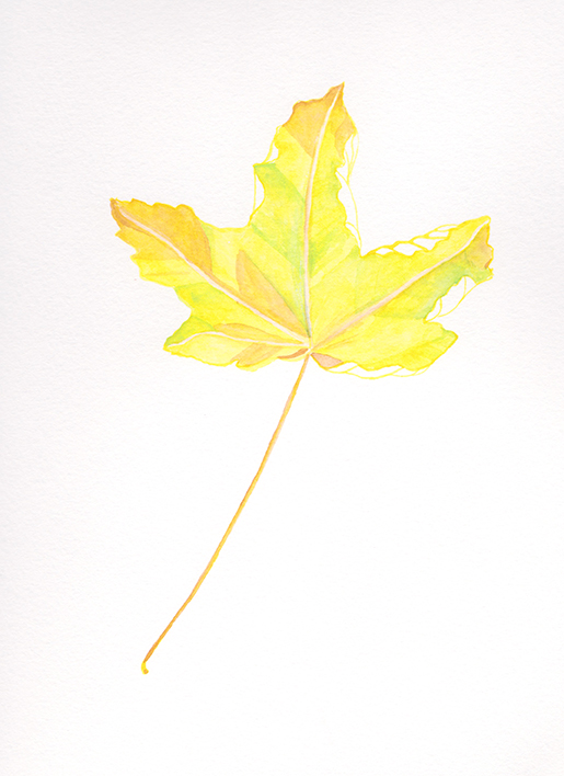 web_yellowleaf.jpg