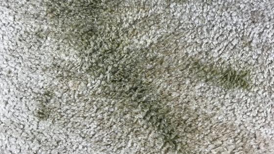 kale smoothie carpet stain.jpg