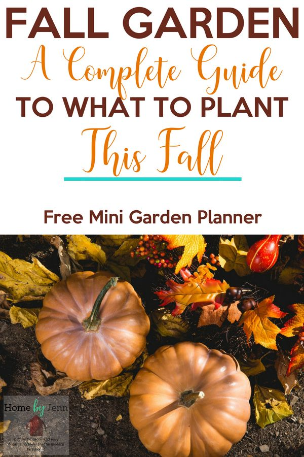 Planting a fall garden can extend your gardening season with ease.  Planting a fall vegetable garden is something that is rewarding and fun.  Download the free mini garden planner to help you plan out your fall garden. #gardening #fallgarden #vegetablegarden #squarefootgarden #garden #flowergarden