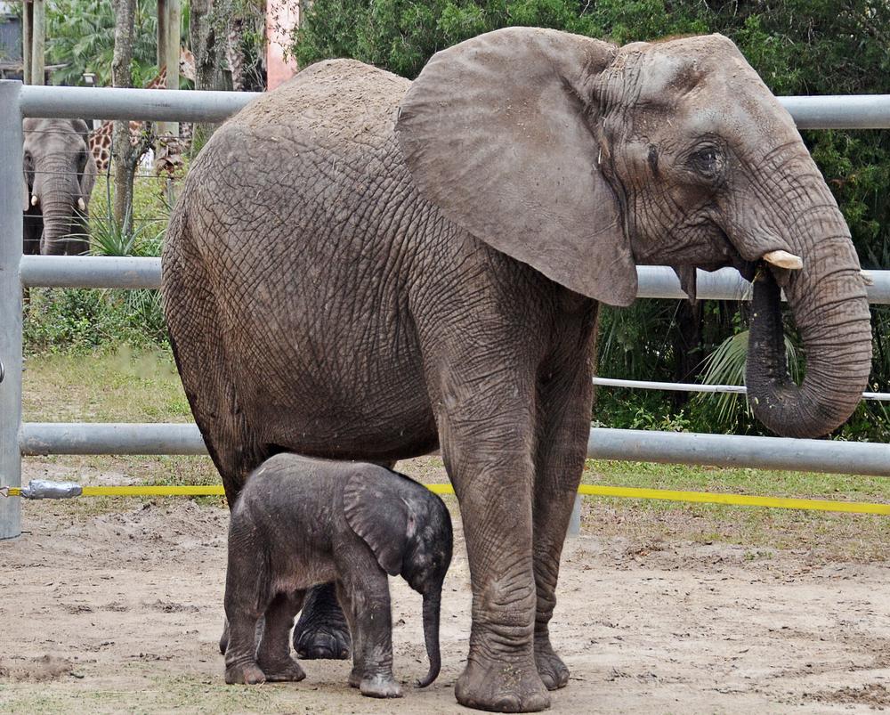 baby-elephant1.jpg