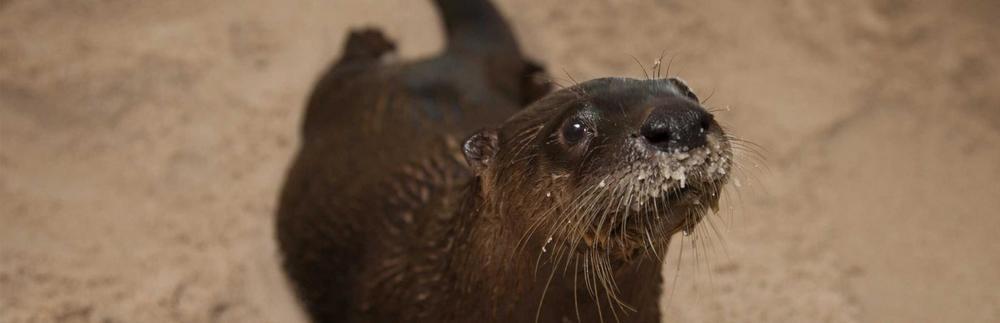 ( Clearwater Marine Aquarium )