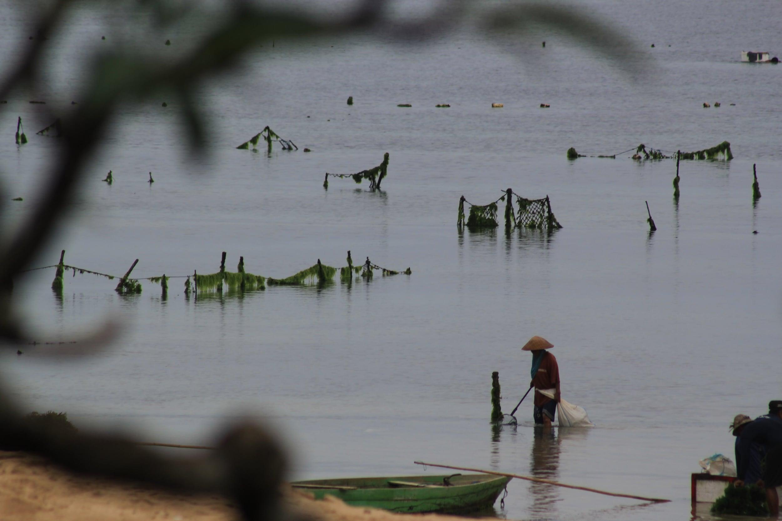 seaweed harvester by desiree east