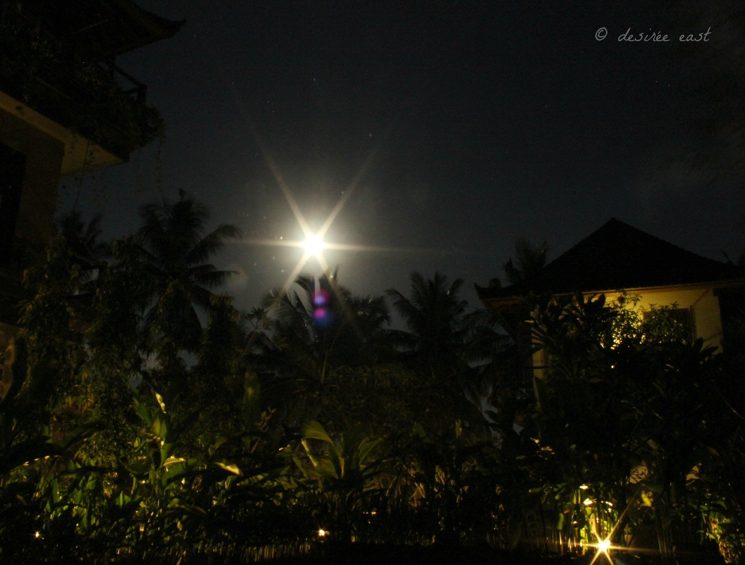 moonlit balinese night. ubud, bali, indonesia. photo by desiree east