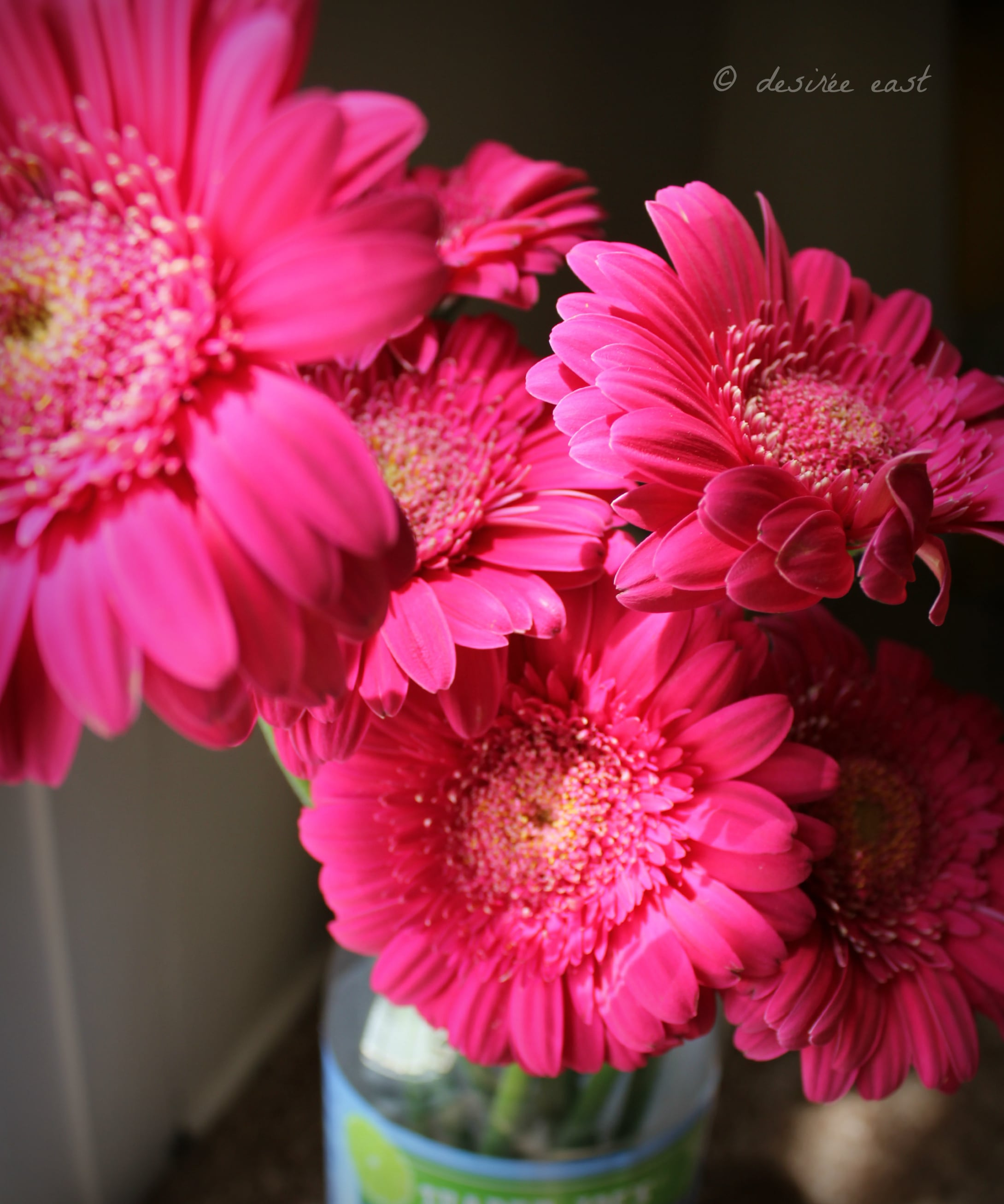 bright, beautiful gerbera daisies. birthday flowers from the hubby. photo by desiree east