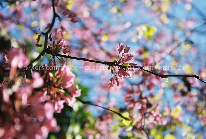 spring-by-desiree-east.jpg