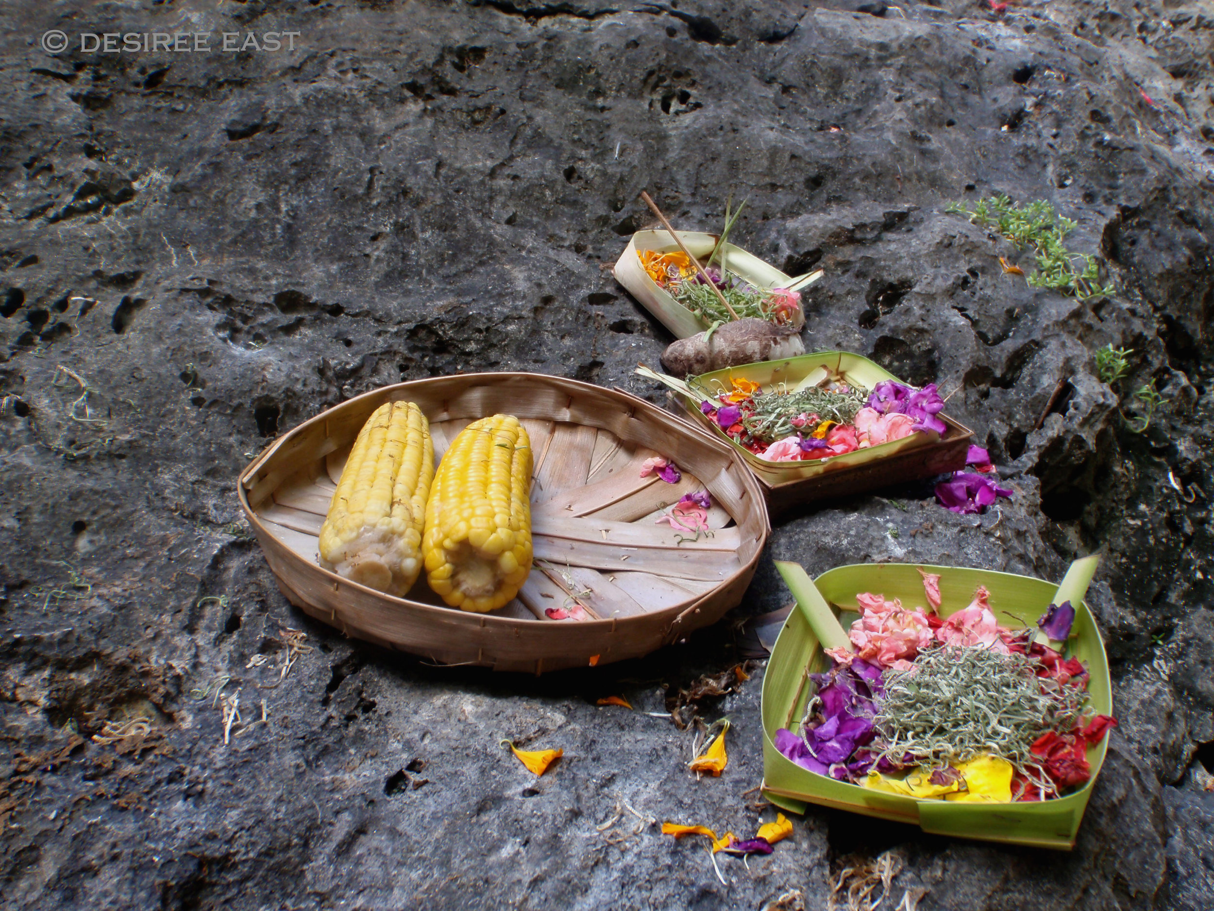 balinese offerings on lava rock. photo by desiree east