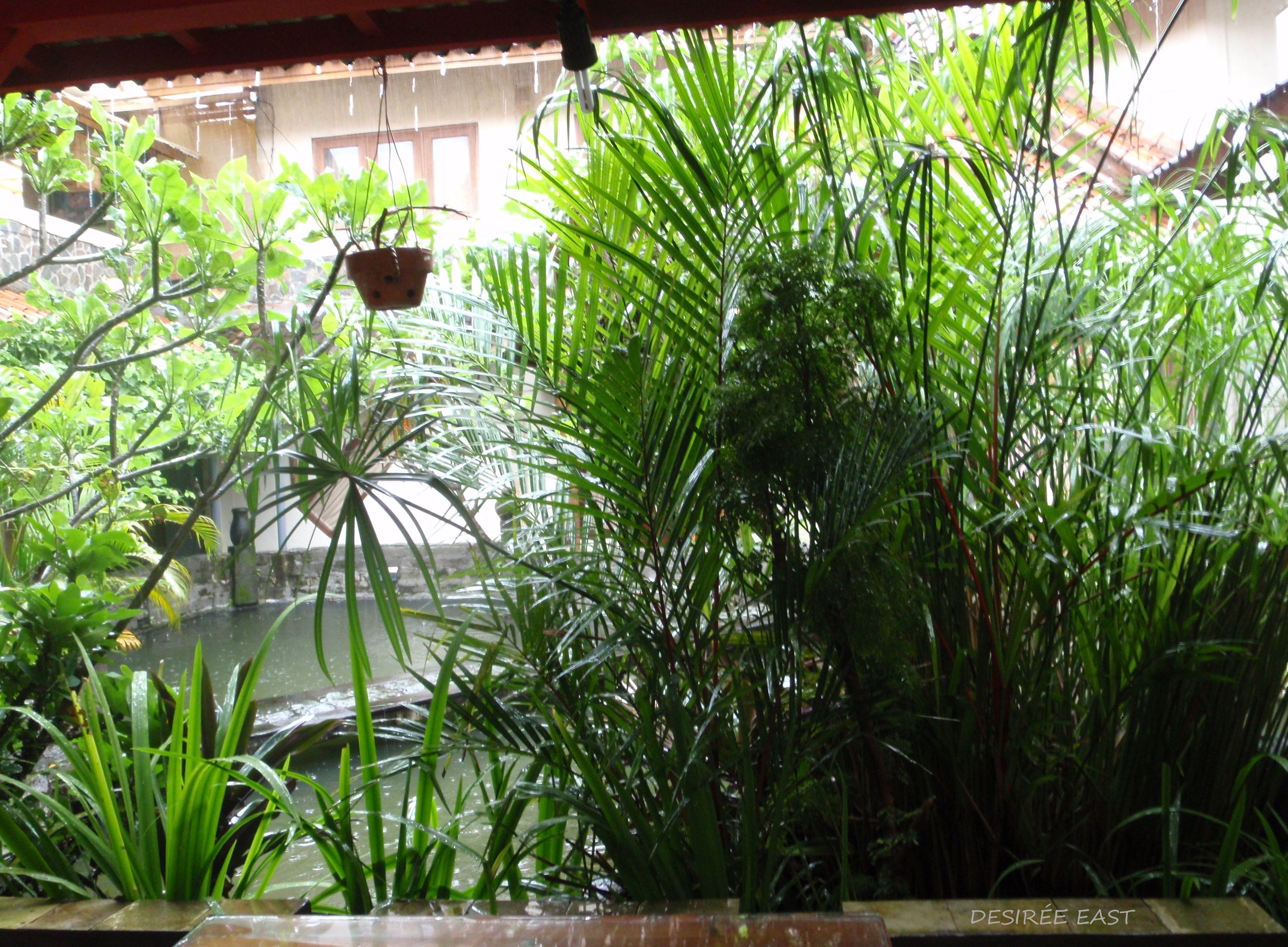 plants near the pond. andree homestay. bali, indonesia. photo by desiree east