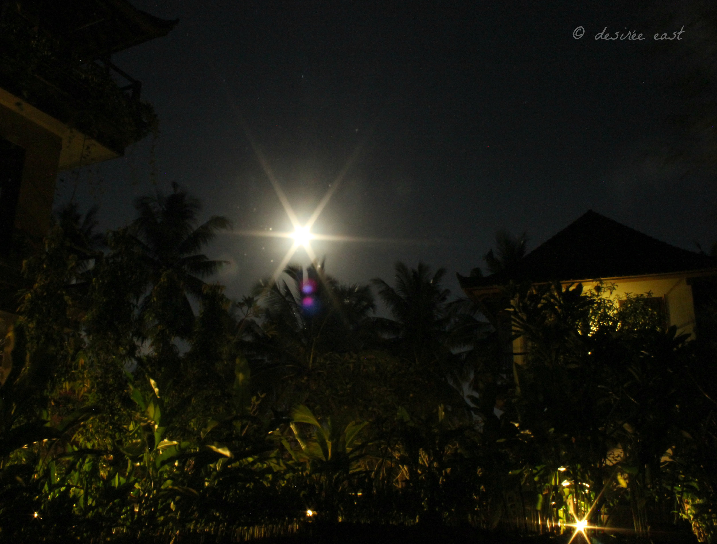 moonlit balinese night. ubud, bali, indonesia. photo by desiree east