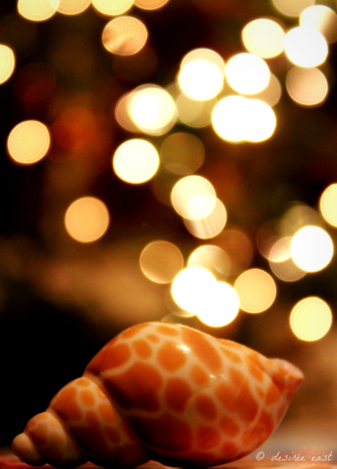 bokeh photography tips by desire east