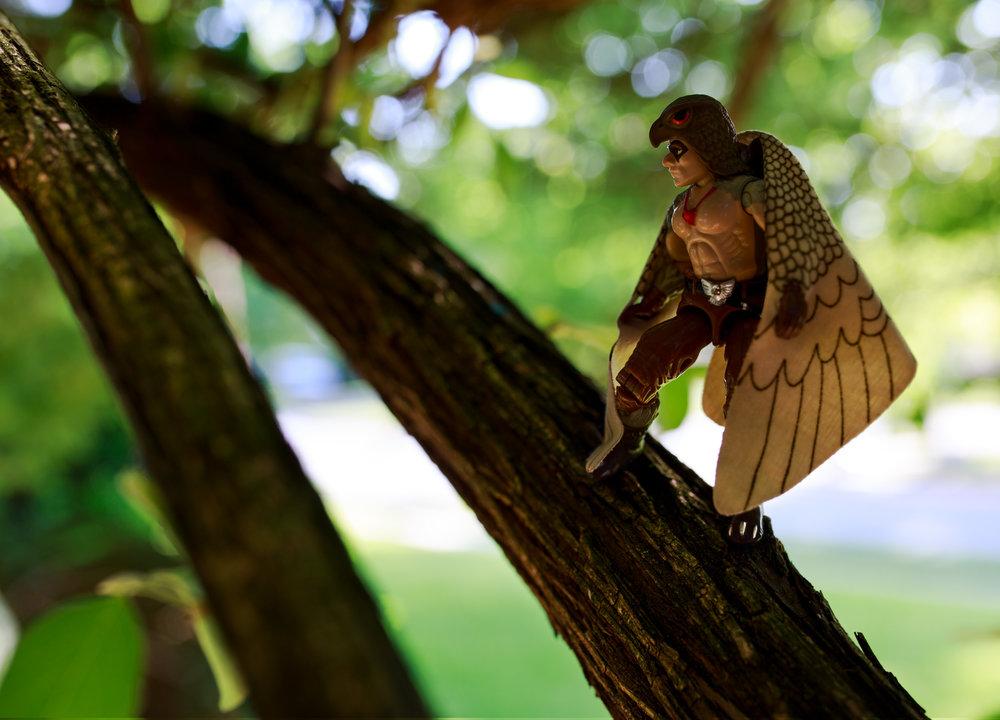 Raptor_Branch_INSTA_LG_SS.jpg