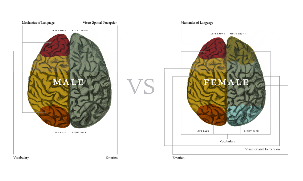 Brain Charts designed by Stephanie Laursen