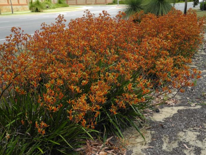 Orange Gem 2.jpg