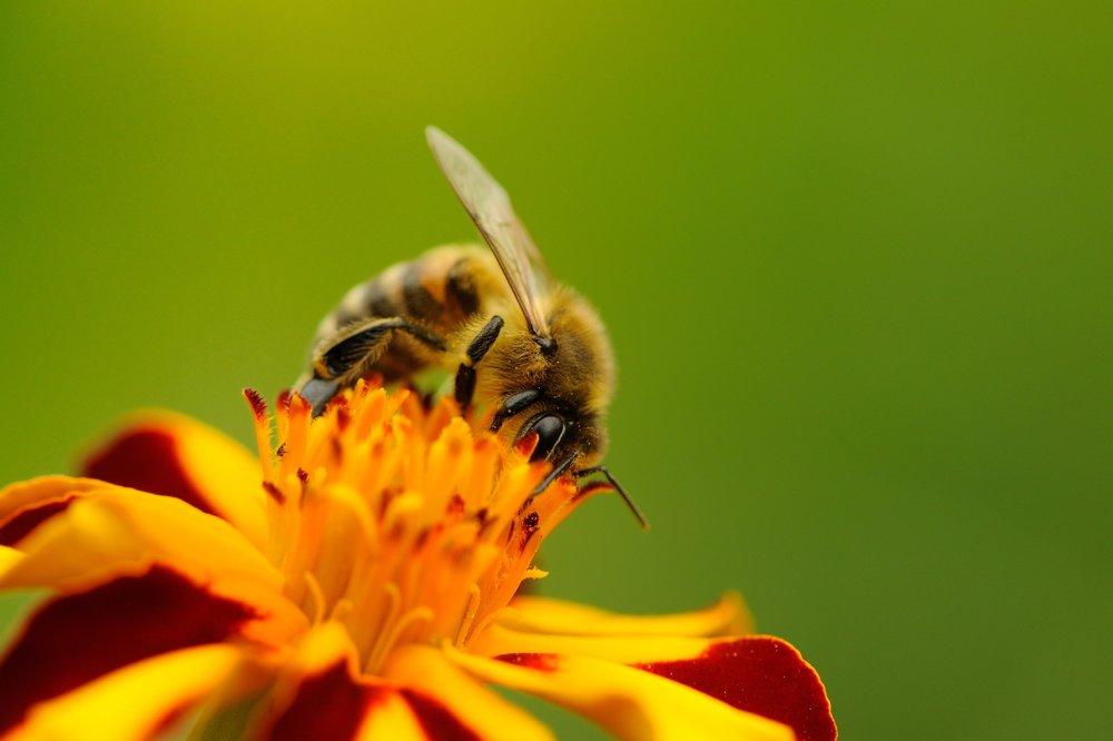 Bee Medicine Animal Totem Power Michelle Hawk