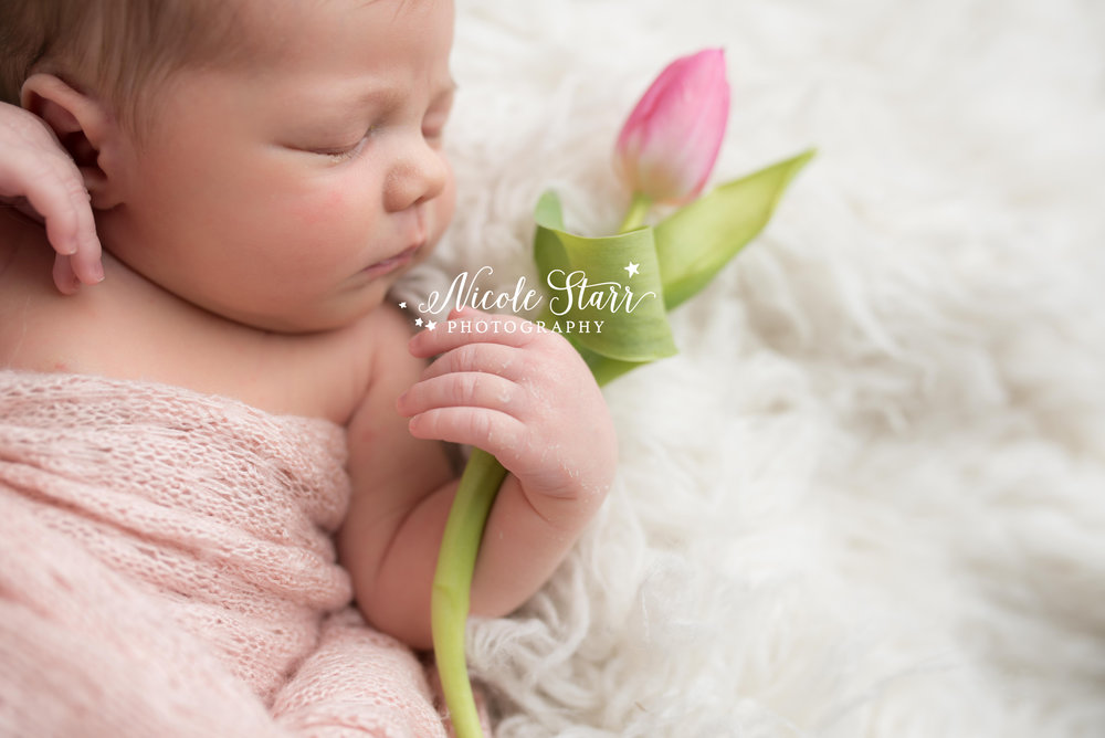 Nicole starr photography saratoga springs newborn photographer boston newborn photographer saratoga springs lifestyle