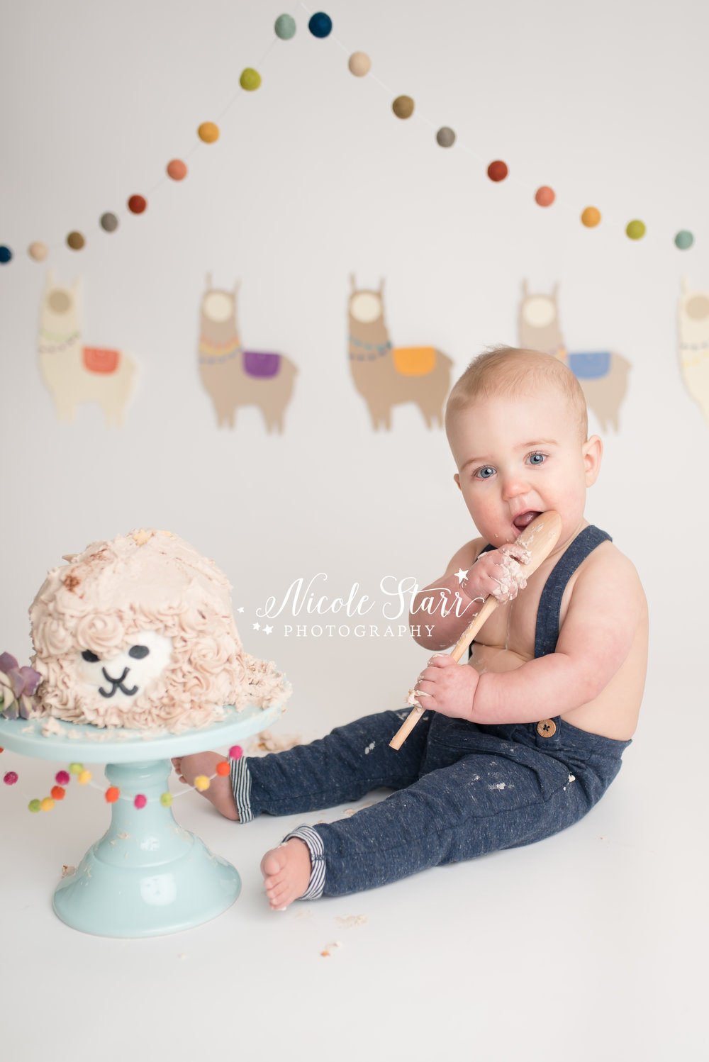 llama cake smash, nicole starr photography, saratoga springs cake smash photographer-5.jpg