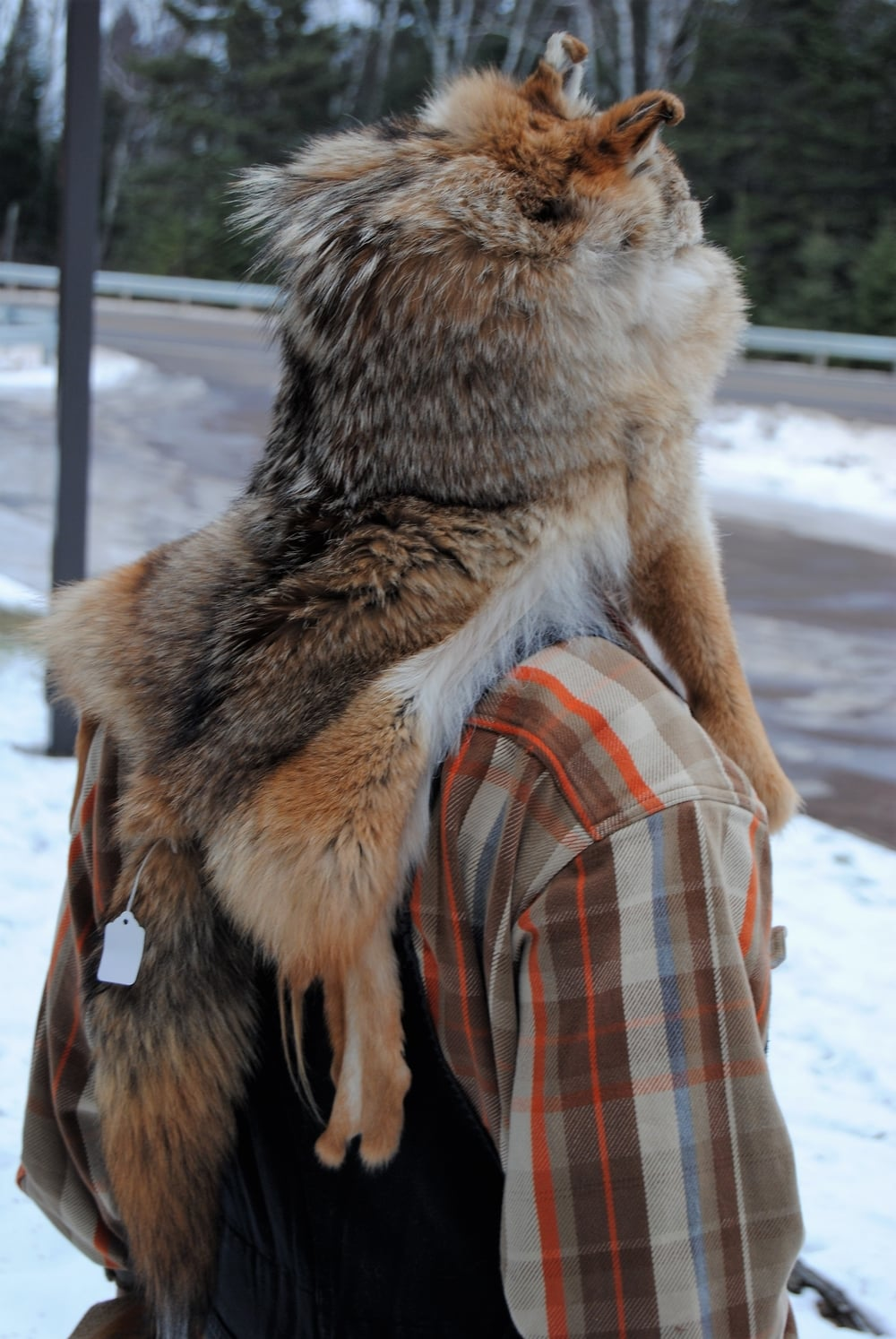 Mountain Man - Coyote