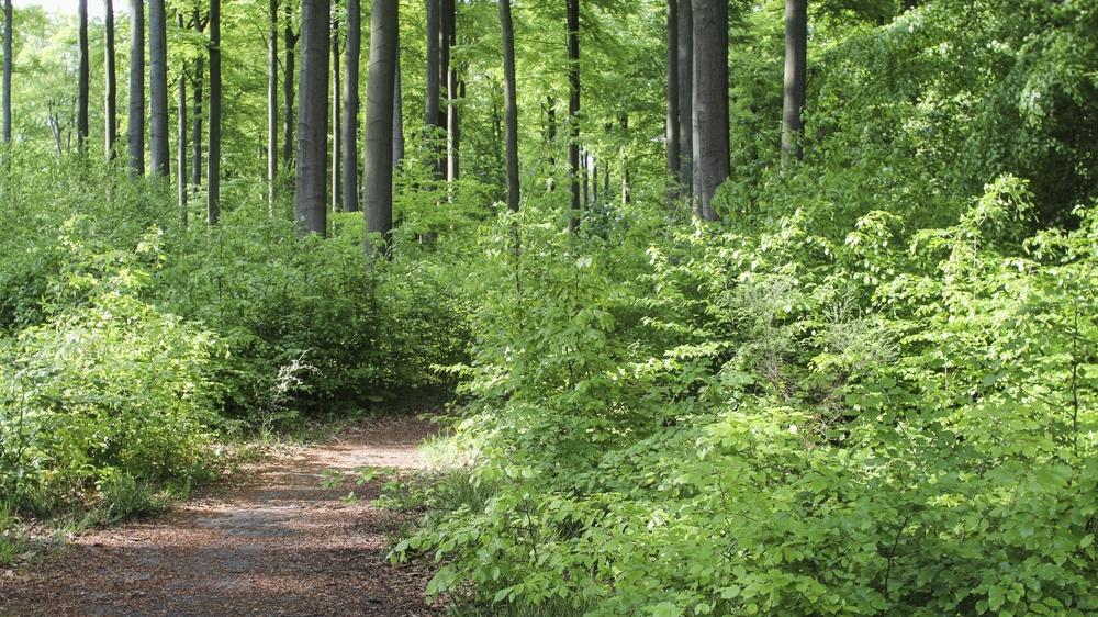 SILVA -Forêt de Soignes
