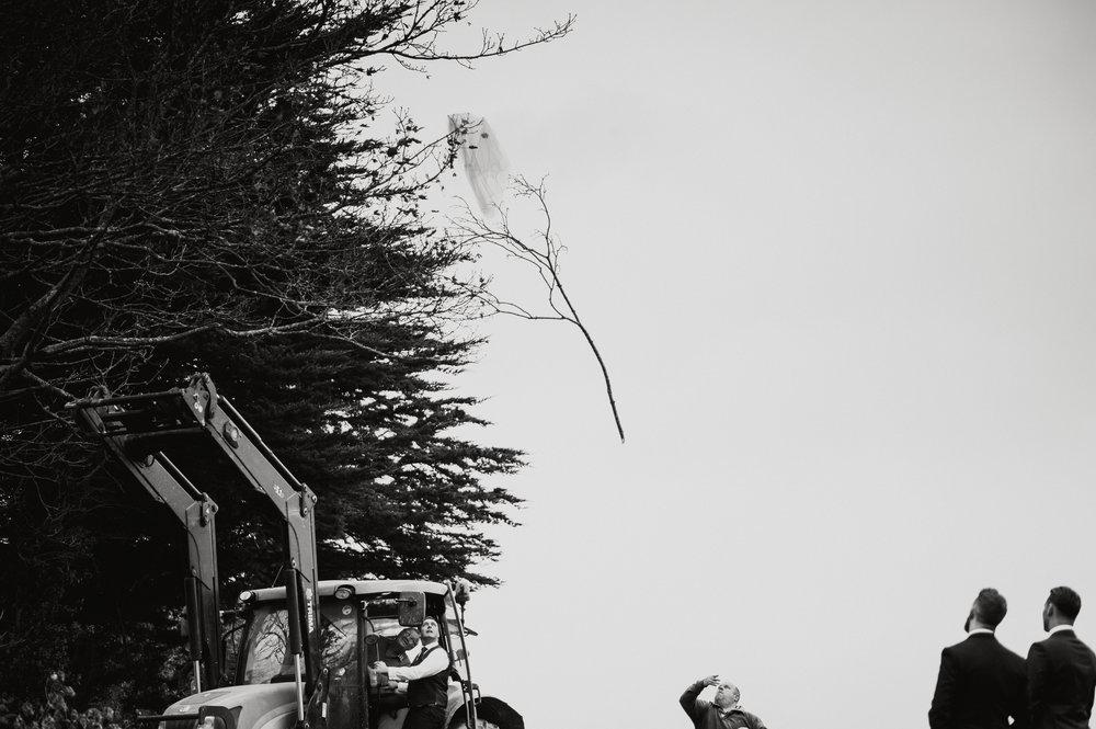 vail-stuck-tree.jpg