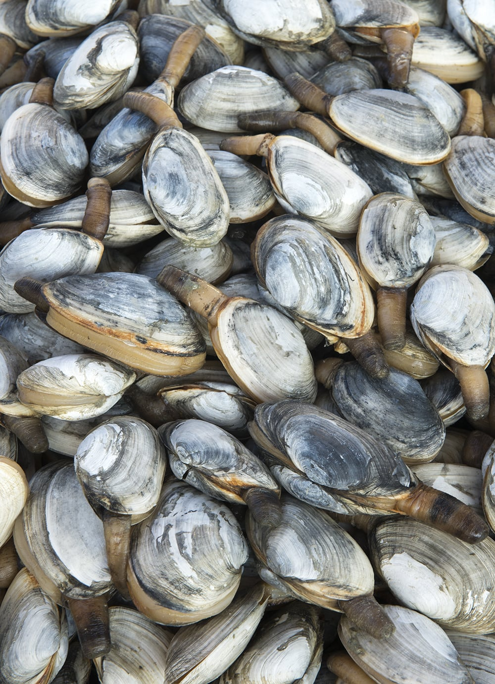 Chesapeake Bay Clamming - Market Watch  -   © Jay Fleming   08.jpg
